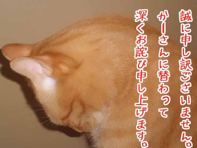 八朔お詫び
