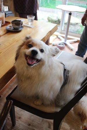 笑う犬622