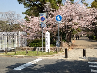 夙川さくらポタ 013