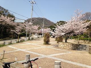 夙川さくらポタ 058