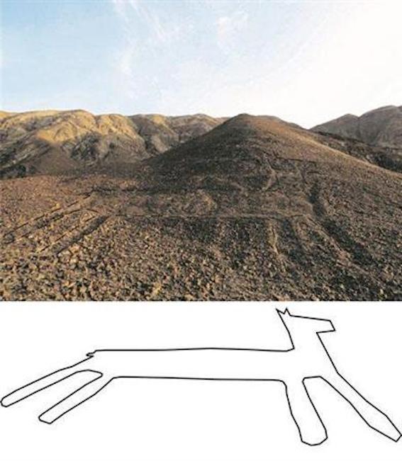 ナスカ地上絵:リャマ