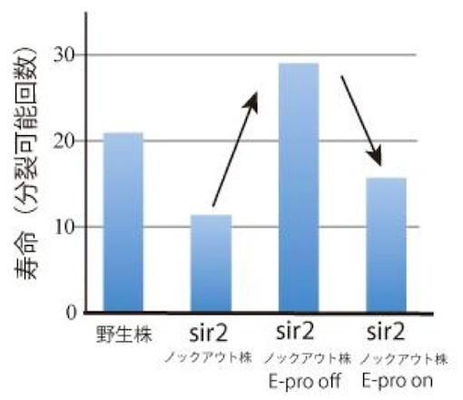 Sir2ラットの実験図01