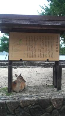 日日色色*カラーセラピストYukimiの日記。-2010071413360000.jpg