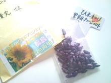 日日色色*センセーションカラーセラピストYukimiの色日記。-2011-06-22 16.44.12