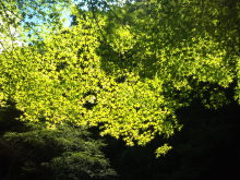 日日色色*カラーセラピストYukimiの色日記。-2011-08-26 13.02.55