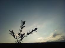 *日日色色*カラーセラピストYukimiの色模様。-DSC_1186