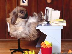 ウサギパソコン