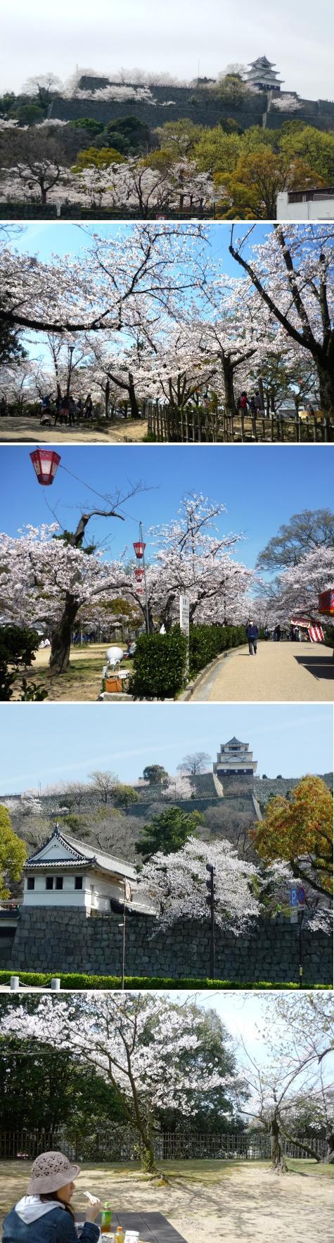 a丸亀城の桜P1300022