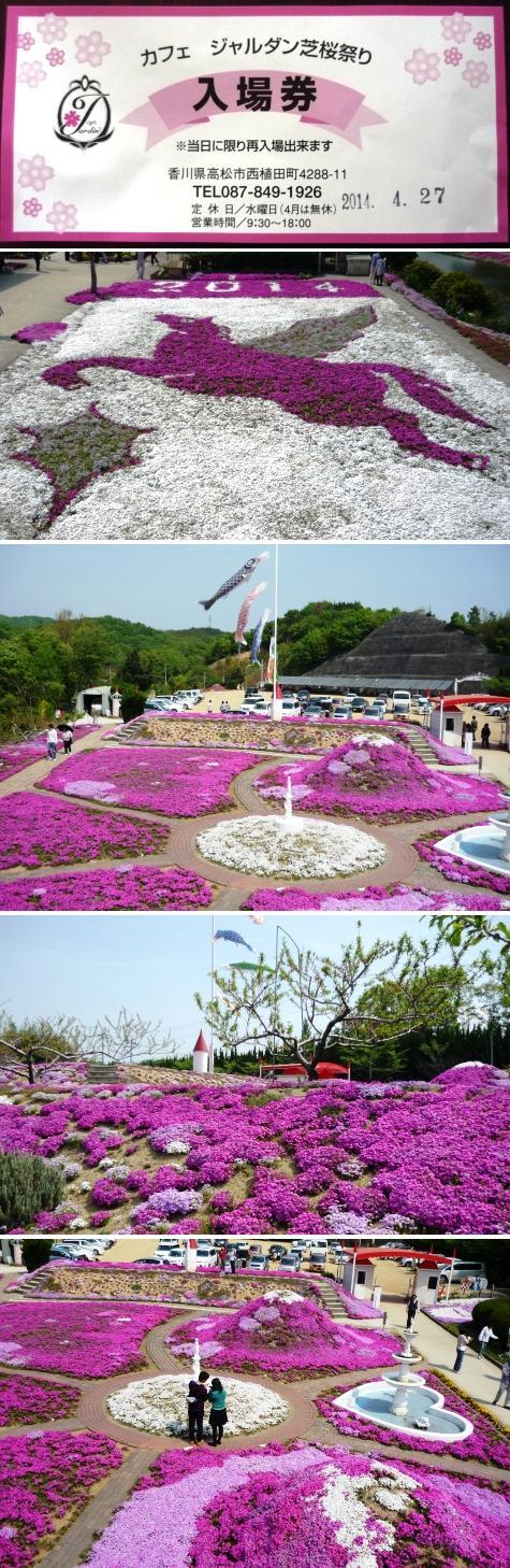 a芝桜祭りP1300385