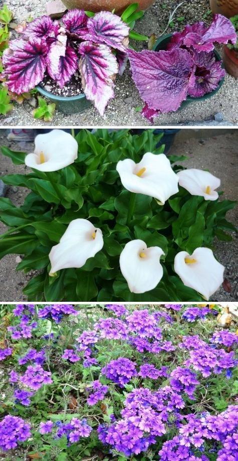 aa2庭の花P1300524