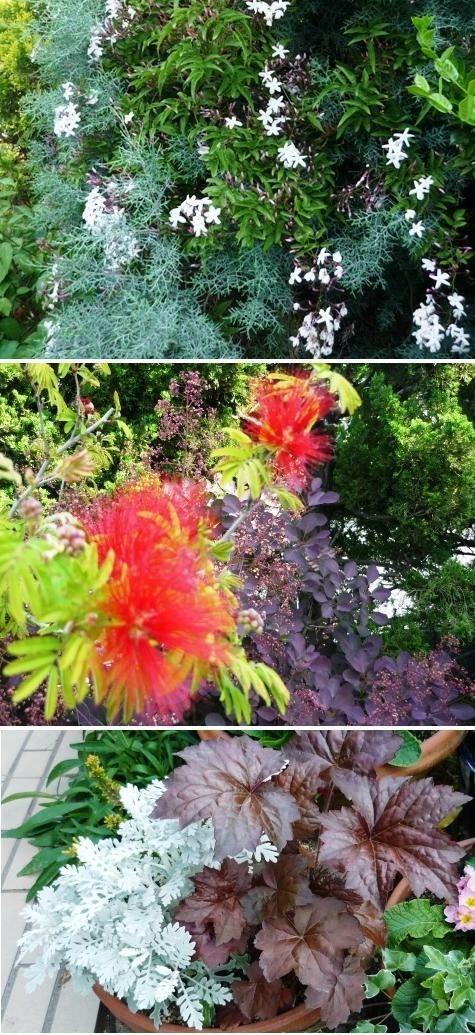 aa1庭の花P1300524