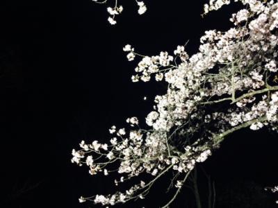 2014.5.16桜5