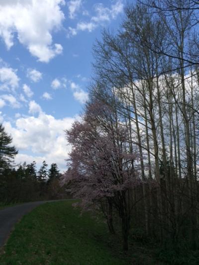 2014.5.16桜3