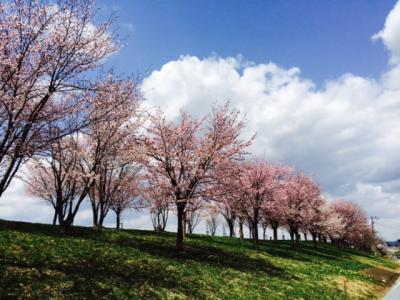 2014.5.16桜2