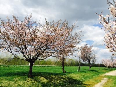 2014.5.16桜
