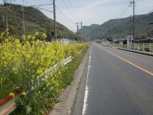 向かい風+菜の花