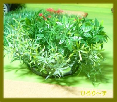 グリーン 11