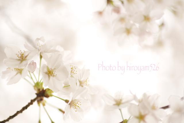 hiiryoyam526DSC_3358.jpg