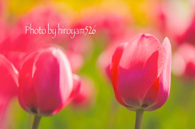 hiiryoyam526DSC_4036.jpg