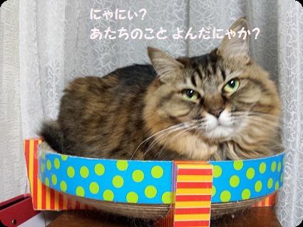 サクラ違いだにゃ(^_^;)