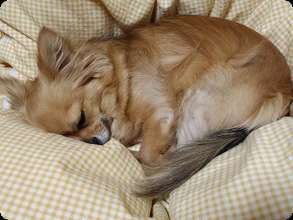 チョロ太くんの寝顔