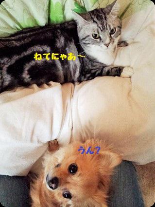 チョロちゃんとリョーちゃん2