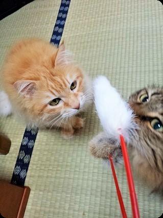猫じゃらしで遊ぶばあちゃんたち
