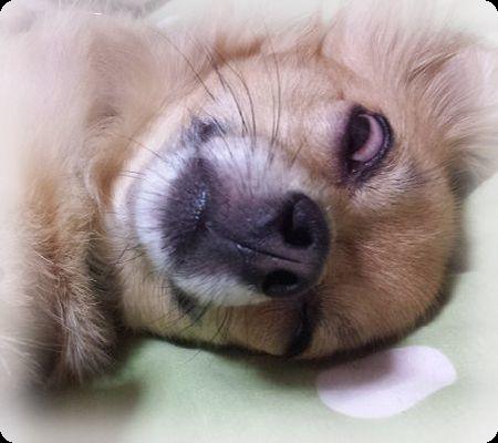 熊五郎の白目