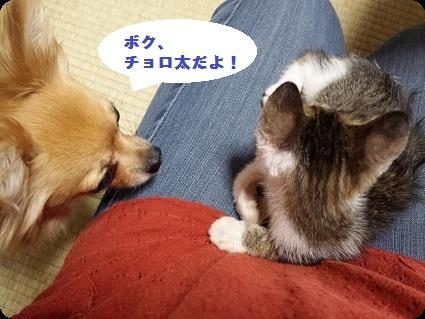 仔猫とわんこ1