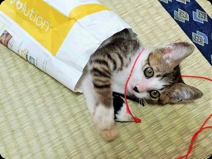 仔猫のぼくちゃん3