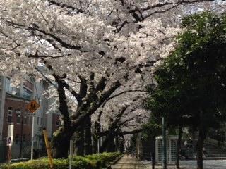 教育の森桜