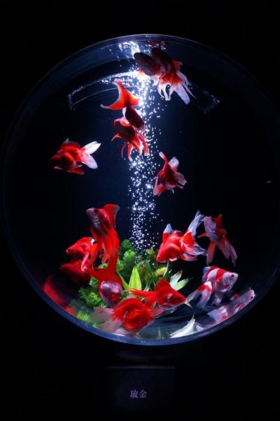 art-aquarium.jpg