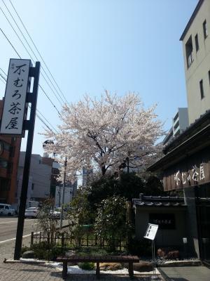 不室屋 桜