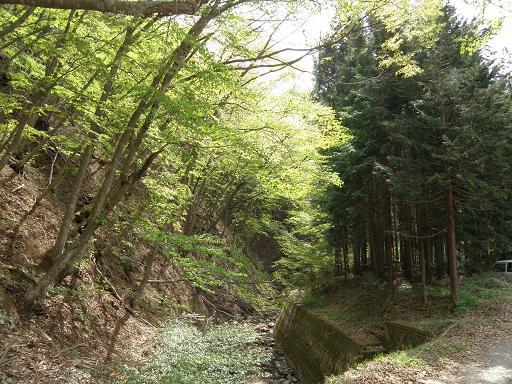 yamazakura280.jpg