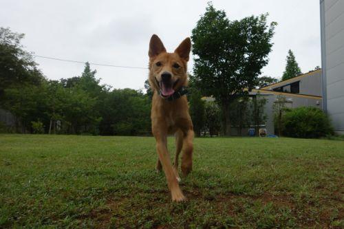 dogrun-20140718-3.jpg