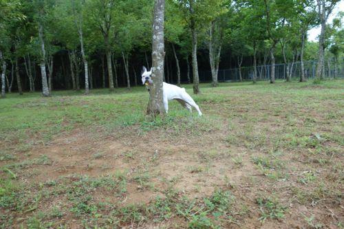 dogrun-20140718-4.jpg