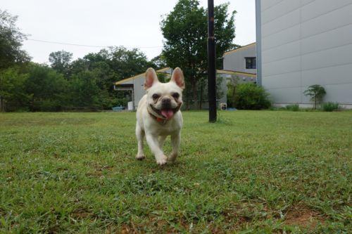 dogrun-20140718-6.jpg