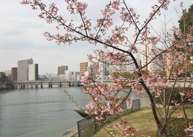 IMG_9923 上柳橋東 桜開花  (640x454)