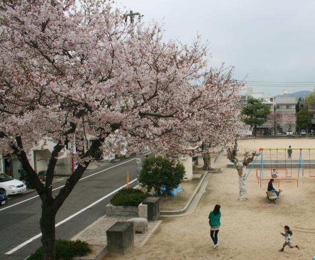 IMG_0144 公園の桜 (1280x1054) (640x527)