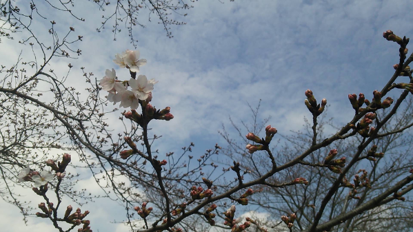 edit_2014-03-29_16-24-24-690.jpg