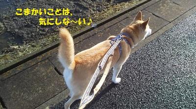 ryo1_2014061410323462c.jpg