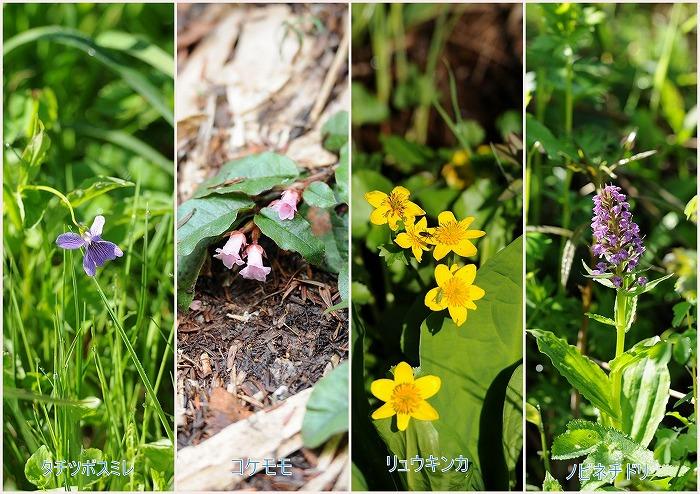 3尾瀬の花