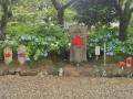 201406矢田寺4