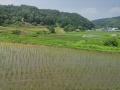 稲渕 風景1