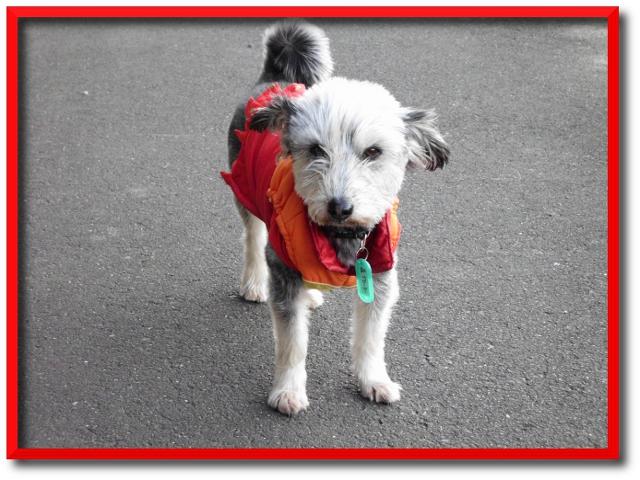 わんちゃん犬編みぐるみ手作り可愛いい人気おしゃれな1405215