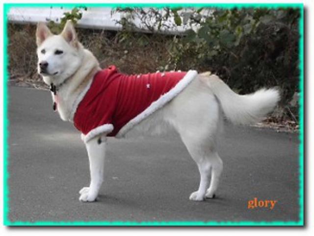 わんちゃん犬編みぐるみ手作り可愛いい人気おしゃれな1405241