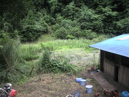 鶏小屋横の畑