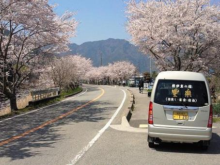 こっとん亭 桜