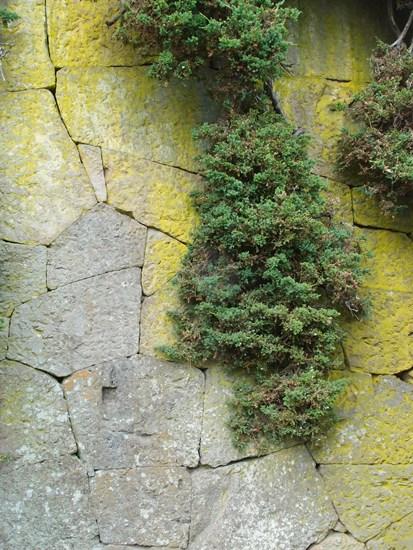 緑の苔生す石垣