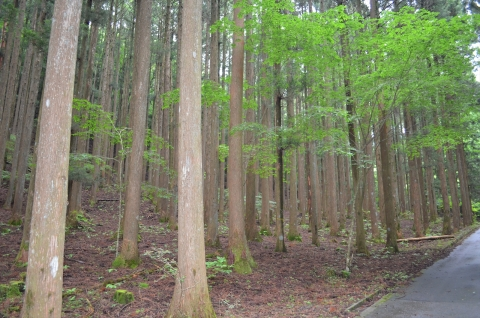 toyanosawa052_R.jpg
